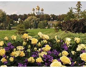 迷你玫瑰,来自俄罗斯的爱