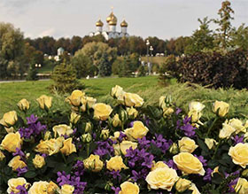 微型玫瑰-来自俄罗斯的爱 Miniature roses, from Russia with love