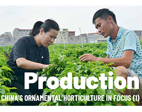 生产-聚焦中国观赏园艺(一)Production-CHINA'S ORNAMENTAL HORTICULTURE IN FOCUS (1)