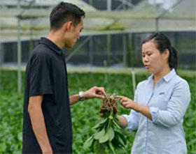 优化植物营养的土壤肥料-以色列ICL特种肥料在中国的成功