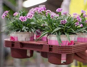 改进植物托盘履行塑料公约的承诺-荷兰签订塑料使用公约