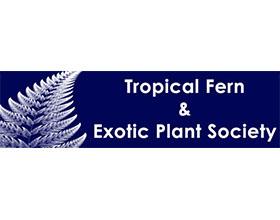 美国南佛罗里达热带蕨类植物与外来植物协会 The Tropical Fern & Exotic Plant Society