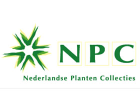 荷兰植物收藏 Nederlandse Planten collecties