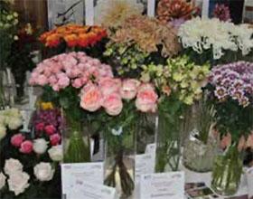莫斯科花卉展按原定计划筹备
