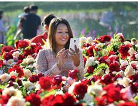 缅甸花卉节-鲜花在亚洲最后一片疆域盛开