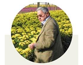 意大利最重要的菊花种植者之一PAPAIANNI帕帕亚尼去世