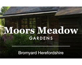英国摩尔草甸花园 Moors Meadow Garden
