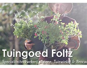 荷兰Tuingoe Foltz植物苗圃和花园