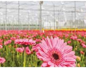 西班牙对遭受重创的观赏植物种植者提供援助计划