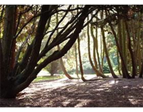 荷兰希尔弗萨姆Pinetum Blijdenstein植物园