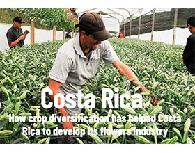 多样化如何帮助哥斯达黎加发展其花卉产业