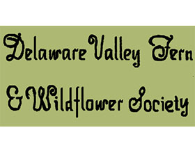 美国特拉华河谷蕨类植物与野花协会 The Delaware Valley Fern & Wildflower Society