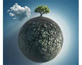 全球化增加了入侵植物病原体的风险 Globalisation increases the risk of invasive plant pathogens