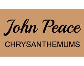 英国John Peace 菊花 John Peace Chrysanthemums