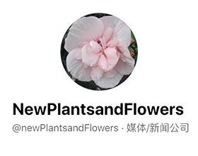 荷兰观赏植物新闻网 newPlantsandFlowers