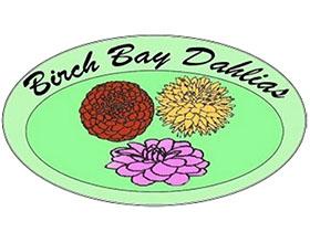 美国桦树湾大丽花 Birch Bay Dahlias