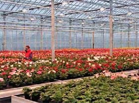 欧盟委员会愿意采取更有力的措施保护CPVR(共同体植物品种权)