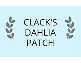 美国克拉克大丽花色块 Clack's Dahlia Patch