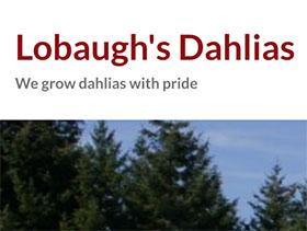 美国洛博的大丽花 Lobaugh's Dahlias