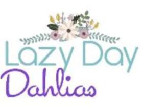 美国懒日大丽花 Lazy Day Dahlias