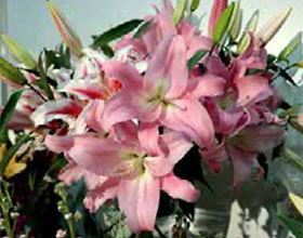 美国园艺产业并购交易 US horticultural industry M&A deals