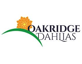 加拿大橡树岭大丽花 Oakridge Dahlias