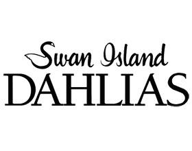 美国天鹅岛大丽花 Swan Island Dahlias