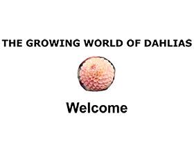 英国成长的大丽花世界 THE GROWING WORLD OF DAHLIAS