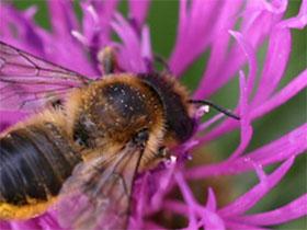 英国授粉者花园网站 The Pollinator Garden