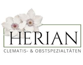 德国赫里安铁线莲苗圃 Clematis Herian