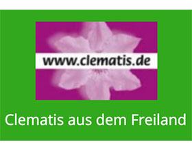 德国户外耐寒铁线莲 Clematis aus dem Freiland