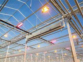 Covid-19大流行如何重塑荷兰温室建筑商的未来