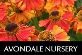 英国雅芳代尔苗圃 Avondale Nursery