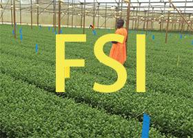 花卉种植可持续发展计划正不断发展 Floriculture Sustainability Initiative
